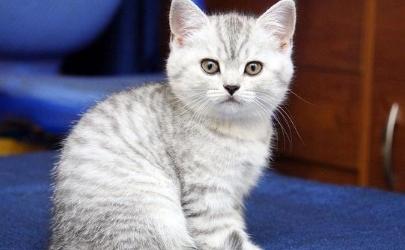 猫踩奶流口水表示什么 猫咪踩奶流口水怎么办