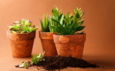 养花土壤不渗水正常吗?这些解决技巧一定要知道