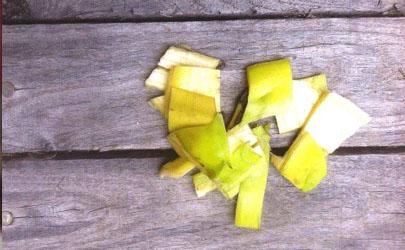 香蕉皮泡几天浇花最好?千万别错了