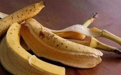 香蕉皮花肥能给兰花用吗?这效果绝了