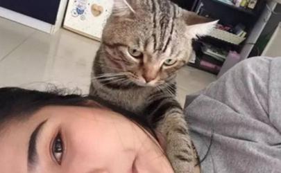 为啥猫咪喜欢抱着主人头睡觉?猫主子太粘人了!