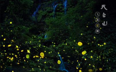 这里的萤火之森绝了!邛崃天台山萤火虫观赏时间及攻略