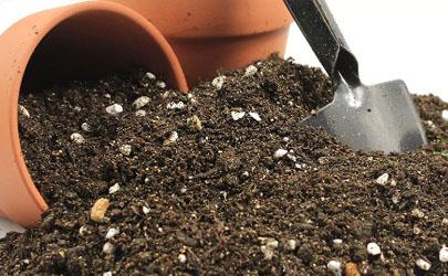 养花的土里要不要拌石子?结局亮了