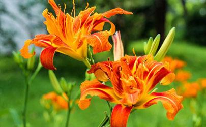 哪种花不能在家里养?这6种千万别养