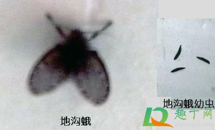 阳台成片死去的小飞虫是啥2