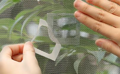 纱窗挡不住的小飞虫是什么虫