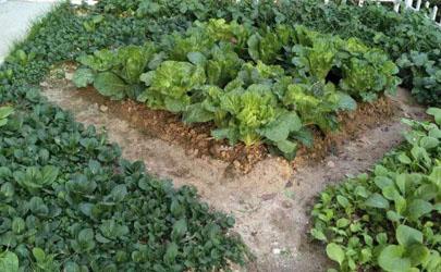 菜园土地太硬怎么办