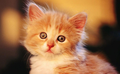 擦花露水会熏到猫吗