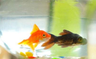 鱼在水里喝不喝水