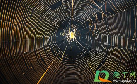 被蜘蛛爬过的皮肤痒怎么办3