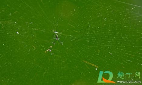被蜘蛛爬过的皮肤痒怎么办4