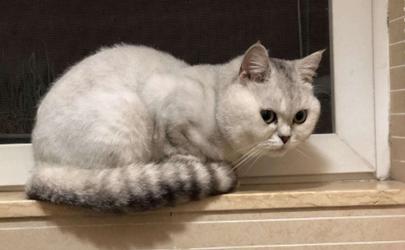 猫喜欢爬窗台要限制它么
