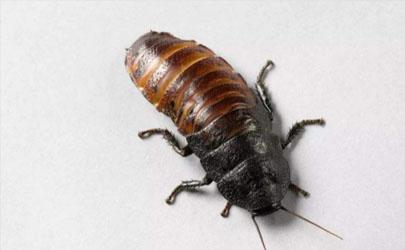 蟑螂爬过的被子能睡么