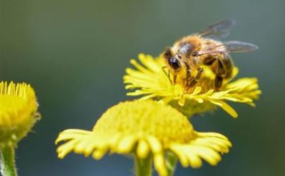花粉过敏皮肤痒能不能热敷