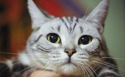 猫毛过敏打喷嚏流鼻涕怎么处理