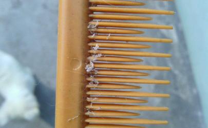梳子上的脏东西怎么洗