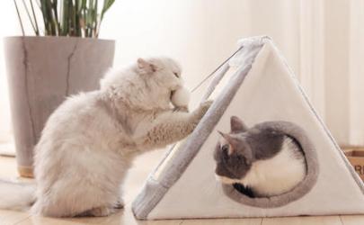 小猫几个月玩猫爬架