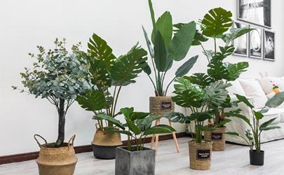 室内绿植可以净化空气吗
