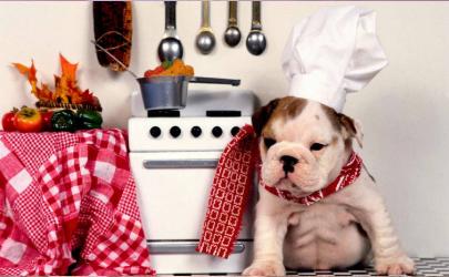 狗狗肚子有虫是不是不吃东西