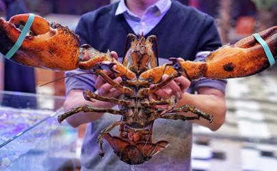 波士顿龙虾会过敏吗