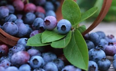 蓝莓怎么洗才干净里面有虫