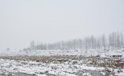 2020至2021年有雪灾是真的吗
