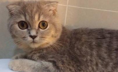 为什么猫跑去厕所睡觉