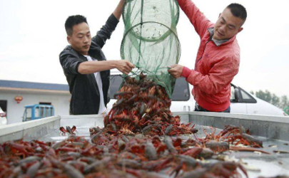 汛期捕捞食用小龙虾有什么危害