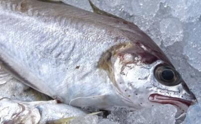 冷冻鱼要不要把内脏拿出来