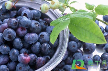 蓝莓皮能不能吃下去4