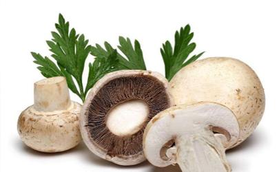 立秋前蘑菇能吃吗