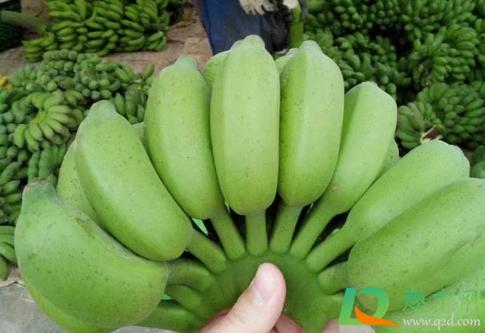苹果蕉和小米蕉哪个好吃2
