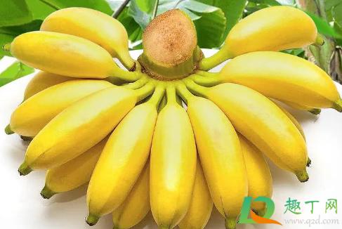 苹果蕉和小米蕉哪个好吃1