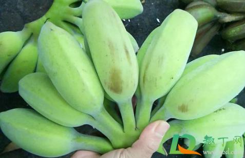 苹果蕉怎么样才是熟了1