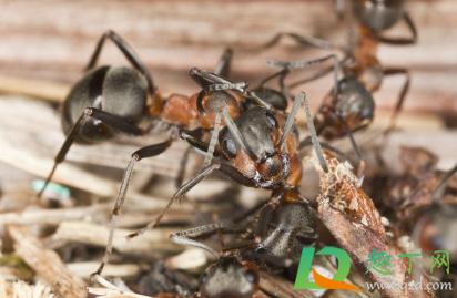 家里面有蚂蚁怎么处理为好4