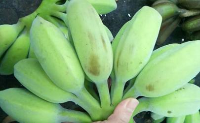 苹果蕉怎么样才是熟了
