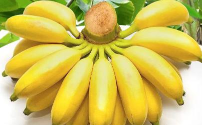 苹果蕉和小米蕉哪个好吃