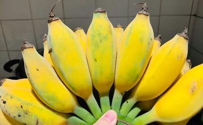 苹果蕉怎么储存比较新鲜