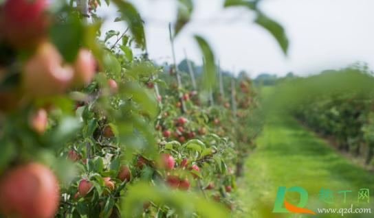 果树增甜用什么肥料好2
