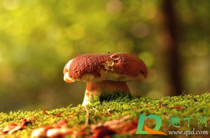 吃野生蘑菇拉肚子怎么办2