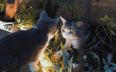 猫咪眼睛好多眼屎有点睁不开怎么回事