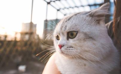 猫咪眼睛下面黄黄的怎么清除