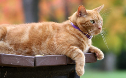 猫咪打疫苗过敏会死掉吗