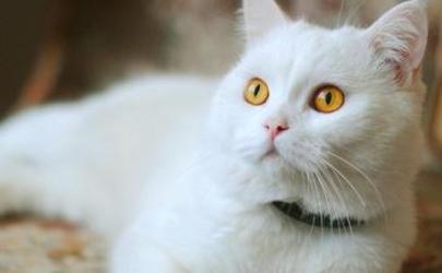 三个月的猫可以吃桃子吗