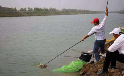 立秋后钓鱼用多长的杆