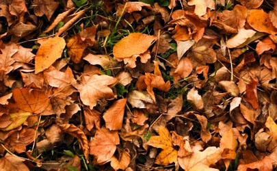 发酵树叶需要翻堆吗