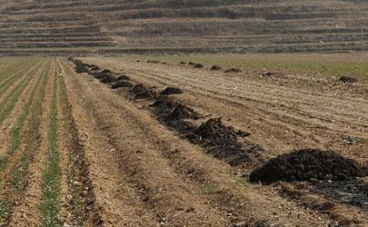 农家肥用什么发酵最好