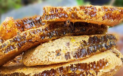老巢蜂蜜今年多少钱一斤