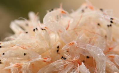 超市买的干虾米直接吃可以吗