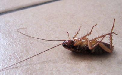 厨房有蟑螂用什么可以祛除